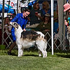 Winners Dog class sans 6-9 puppy