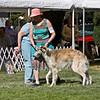 1st - Novice Dogs<br /> BISTROI VALESKA INTREPID. HP269199/04. 4/8/07. Breeders: Yvonne and Rey McGehee and Carol Hannon. By Vega Shelk Shafran - Valeska We All Shine On. Owner: Dr. Carol Hannon   8x10