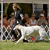 1st - 9-12 Puppy Dogs<br /> ZOOROPA ADRIENNE HORIZON'S EDGE. HP262536/05. 5/8/07. Breeders: P.A. Anderson and J.A. Leikam. By Ch. Laureate Gavril Good As Gold – Ch. Adrienne Wind Rose. Owners: P.A. Anderson and J.A. Leikam    8x12