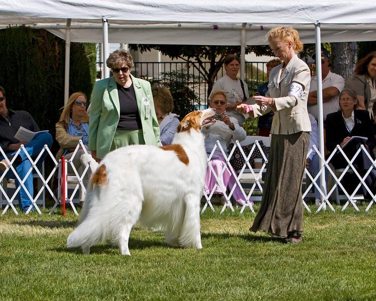 BOB Competition<br /> CH. SUNBURST HUNTSMAN AT MECHTA. HP039192/02. 1/11/03. Breeders: G. Thompson, R. Terry and T. Trikosko. By Ch. Chataqua's Valimir of Kyrov, SC – Ch. Sunburst Amazingrace Troybhiko. Owners: Garnett Thompson and Marilyn and Stuart McGraw (Dog)  8x10