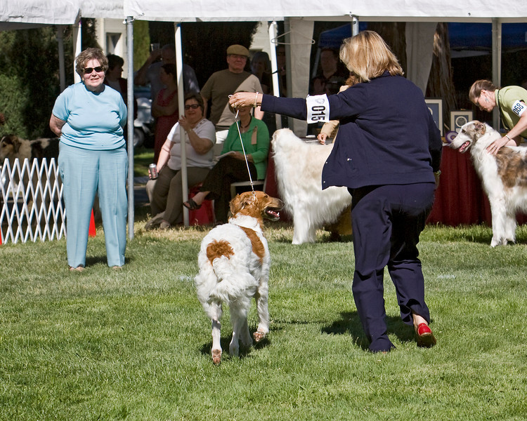 1st - 6-9 dogs<br /> ORONZOVA DANCE PARTY AT VASCHKA. HP277514/08. 10/15/07. Breeder: Suzanne Deghi. By Ch. Sunburst Huntsman at Mechta – Ch. Virshina Oronzova Sweet Sizzle, JC. Owners: Suzan and Kenny Tintorri  8x10