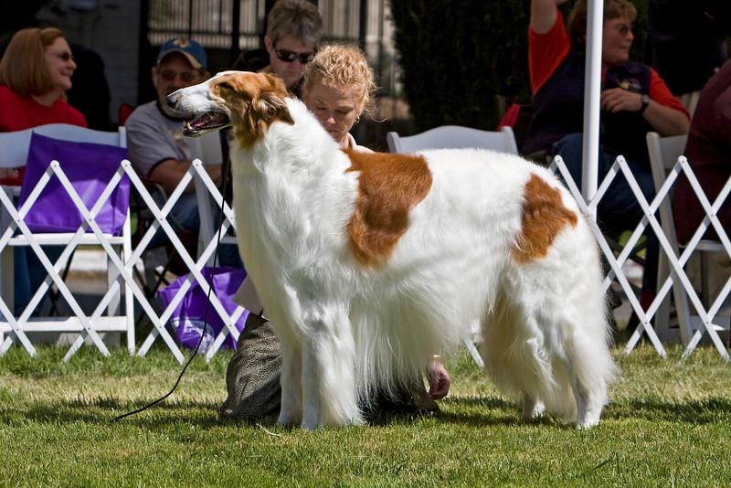 BOB Competition<br /> CH. SUNBURST HUNTSMAN AT MECHTA. HP039192/02. 1/11/03. Breeders: G. Thompson, R. Terry and T. Trikosko. By Ch. Chataqua's Valimir of Kyrov, SC – Ch. Sunburst Amazingrace Troybhiko. Owners: Garnett Thompson and Marilyn and Stuart McGraw (Dog)  8x12
