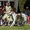 1st in Am Bred Dogs<br /> VITRINA ALPENGLOW. HP213978/01. 4/27/06. Breeder: Valori Vig Trantanella. By Vitrina The Rainmaker – Ch. Vitrina Northern Lights. Owner: Valori Vig Trantanella   8x12