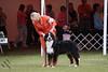 IMG_2187-De-Li's Focus On The Future-9-12mos dog