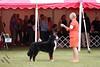 IMG_2205-De-Li's Focus On The Future-9-12mos dog