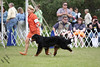 IMG_2191-De-Li's Focus On The Future-9-12mos dog