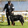 BMDCA 2018 Dogs -305
