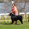 BMDCA 2018 Dogs -1075