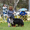 BMDCA 2018 Dogs -3339