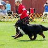 BMDCA 2018 Dogs -1187