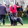 BMDCA 2018 Dogs -1179