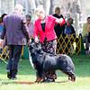 BMDCA 2018 Dogs -1181