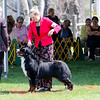 BMDCA 2018 Dogs -1177