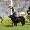 BMDCA 2018 Dogs -1317
