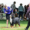 BMDCA 2018 Dogs -3116