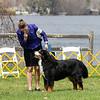 BMDCA 2018 Dogs -3095