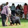 BMDCA 2018 Dogs -3126