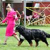 BMDCA 2018 Dogs -3109