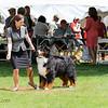 BMDCA 2018 Dogs -3001