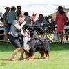 BMDCA 2018 Dogs -2998