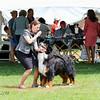 BMDCA 2018 Dogs -2999