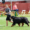 BMDCA 2018 Dogs -3005
