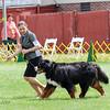BMDCA 2018 Dogs -3002