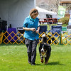 BMDCA 2018 Dogs -1890
