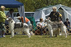 Open Dogs<br /> L:  Steppelands Final Mikhail of Abidjan (Cathy Nasierowski)<br /> R:  Avanturin (Carol Kubiak-Zamora)