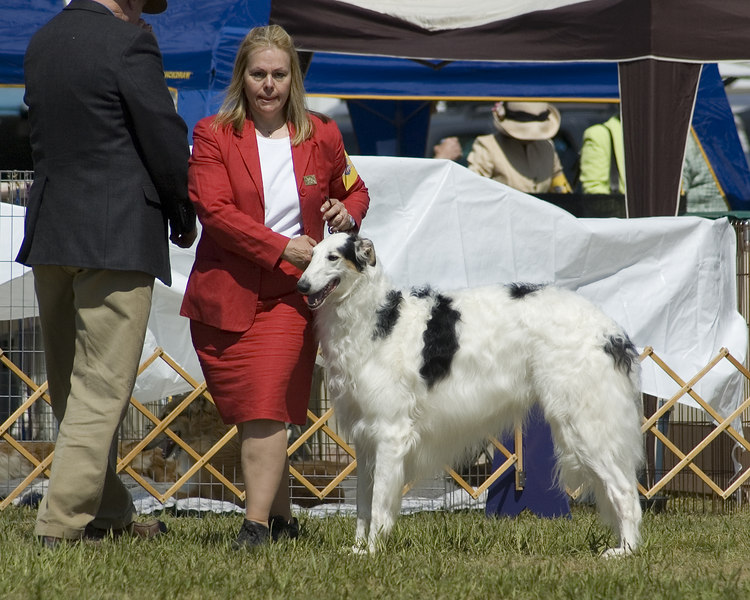 CH. LAUREATE ADR'N TAKE A BOW AT OZ<br /> Ch. Blackmoor Dust In The Wind  x Ch. Adrienne Seranade In Blue