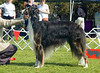 Ch Leicro's Russian Zoloto Zima - 2nd Open dogs