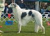 Marakhoff Misckaah Krug - 2nd Veteran dogs.