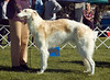 Kenibea The Chosen One - 1st in Junior dogs and Best Junior.