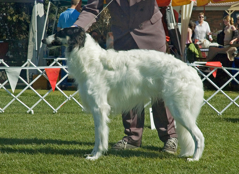 Clovelly On a Clear Day - 3rd Intermediate dogs