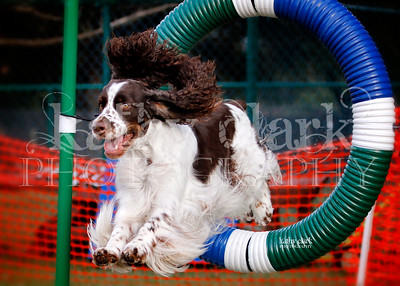 CPE Agility Fri Jan 2014