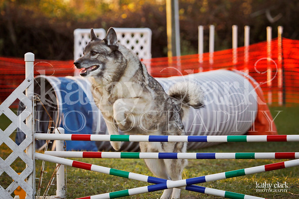 Pawsitive Action CPE Agility Trial-EDITED