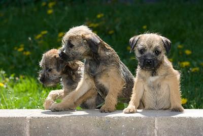 Pups_7898_BdrTrr_JM_PAW