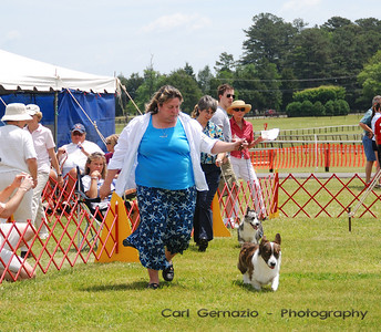 DSC_5530 - During Cardigan Welsh Corgi Judging