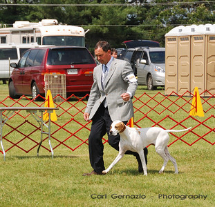 DSC_5801 - Pointer #8 CH COOKIELAND SEASYDE HOLLYBERRY  Sporting Group 1st Place Winner