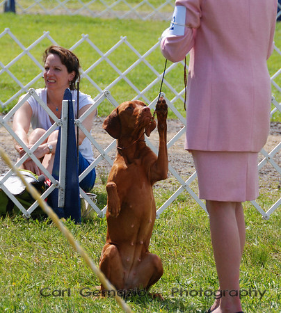 Mattaponi Kennel Club - May 17, 2008
