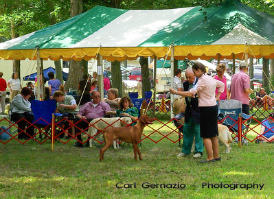 Talbot Kennel Club - Saturday, August 15, 2009