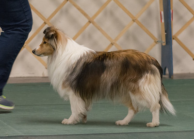 Dog Shows 2014