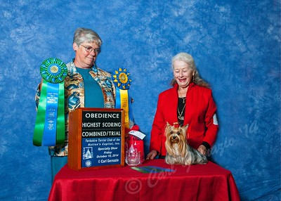 Yorkshire Terrier Regional Specialty - Oct. 10, 2014