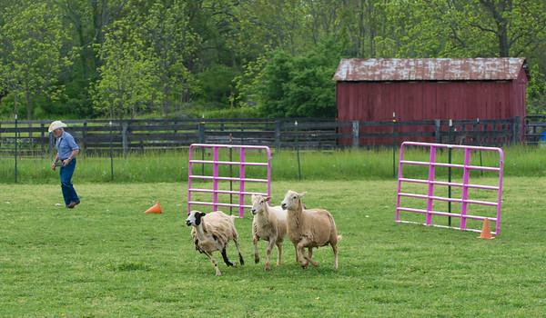 PVSSC Herding Trials - May 2015