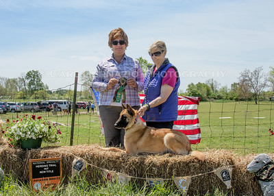 Herding - Winners Photos - Sunday, May 8, 2016