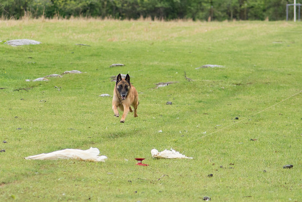 Coursing  Ability Trials - Sat., May 7, 2016