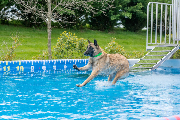 North America Diving Dogs - NADD - May 13 - 15, 2016