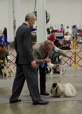 Northern Neck Kennel Club - January 12, 2012