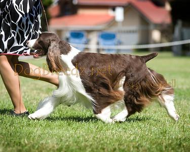 GCESSA 2013 - Veteran Dog