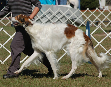 Reserve Winners Dog from 12-18 dog  DOLINA EXTREME MAKEOVER AT TPEEKS-BRAEMAR. HP 30397502. 05-22-08 			 By Dolina Islands In The Stream - Foxcroft Maybelline By Dolina. Owner: Susan Christie & Susan Jacobsen-Grove Breeder: Susan L Jacobsen & Peter E SanPaolo.   Tickner photo